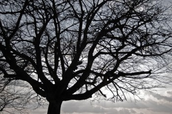 attachment-tree-silhouette-1365909120rns